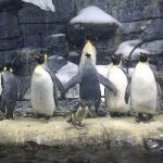 all-about-penguins